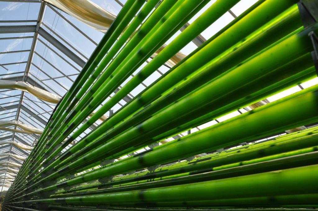 Chlorella Produktionsanlage in Klötze